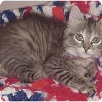 Adopt A Pet :: Megan - Franklin, NC