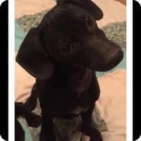 Adopt A Pet :: HANK - Winchester, CA
