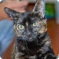 Adopt A Pet :: Tiger Lily - Prescott, AZ