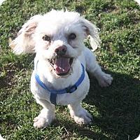 Adopt A Pet :: Myles - Henderson, NV