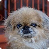 Adopt A Pet :: Philomena - Princeton, MN