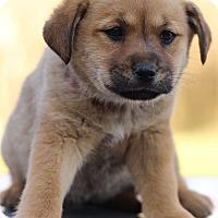 Adopt A Pet :: Orange - Waldorf, MD