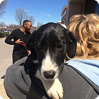 Adopt A Pet :: Adam - Hohenwald, TN