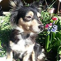 Adopt A Pet :: Holly - Fresno, CA