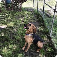 Adopt A Pet :: Hazel - Glen St Mary, FL