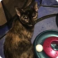Adopt A Pet :: Lexi - Chandler, AZ