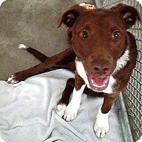 Adopt A Pet :: Olivia - Kalamazoo, MI