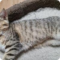 Adopt A Pet :: Mindi - Bulverde, TX
