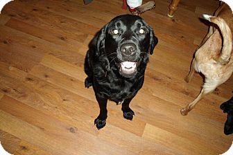Golden Retriever/Labrador Retriever Mix Dog for adoption in La Crosse, Wisconsin - Macy