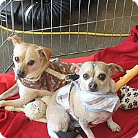Adopt A Pet :: Lucy - Acton, CA