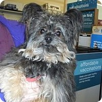 Adopt A Pet :: Mr. Iddy Bit - Shawnee Mission, KS