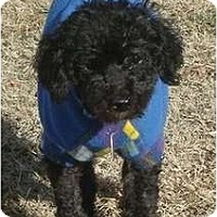Adopt A Pet :: Yuri - Madison, WI