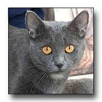 Adopt A Pet :: Tawny - Howell, MI