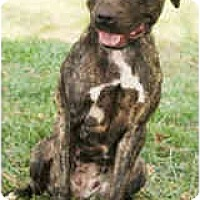 Adopt A Pet :: Jenna - Chicago, IL