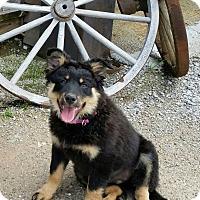 Adopt A Pet :: Cassie - Weatherford, TX