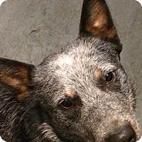 Adopt A Pet :: Blazer is Adopted - Remus, MI