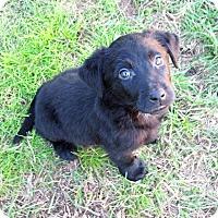 Adopt A Pet :: Tyler - Waller, TX