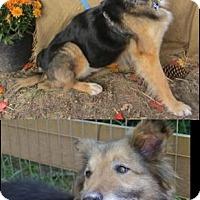 Adopt A Pet :: Bridget - Roxboro, NC