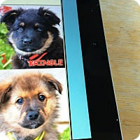 Adopt A Pet :: KRINGLE AND RUDY - Los Angeles, CA