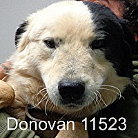 Adopt A Pet :: Donovan - Greencastle, NC
