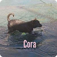 Adopt A Pet :: Cora - Brunswick, ME