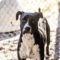 Adopt A Pet :: Elk - Decatur, GA