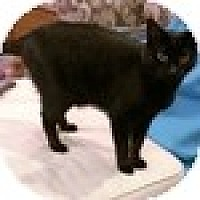Adopt A Pet :: Diva - Vancouver, BC