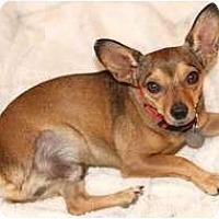 Adopt A Pet :: Simon - Scottsdale, AZ