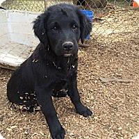 Adopt A Pet :: Cane - Fort Valley, GA