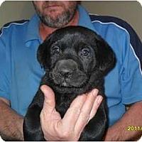 Adopt A Pet :: Reed - Glastonbury, CT