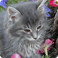 Adopt A Pet :: Brooks - Clearfield, UT