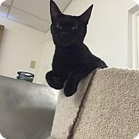 Adopt A Pet :: Winnie - Trevose, PA