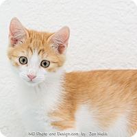 Adopt A Pet :: Jack - Fountain Hills, AZ