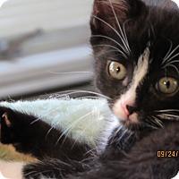 Adopt A Pet :: Peter - Southington, CT