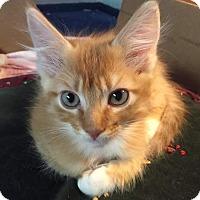 Adopt A Pet :: Cress - Scottsdale, AZ