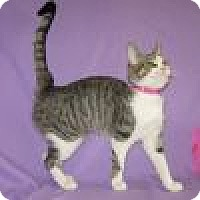 Adopt A Pet :: Zarita - Powell, OH