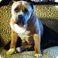 Adopt A Pet :: Tank (COURTESY POST) - Baltimore, MD