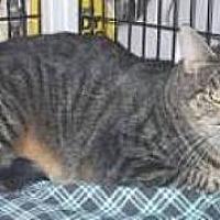 Adopt A Pet :: Pirulina - Miami, FL