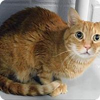 Adopt A Pet :: Elmo - Topeka, KS
