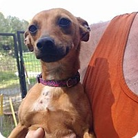Adopt A Pet :: Coco - Waxhaw, NC
