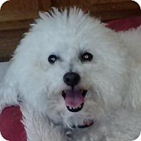 Adopt A Pet :: Angel - La Costa, CA
