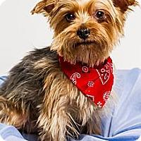 Adopt A Pet :: Maxwell - Baton Rouge, LA