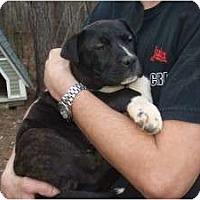 Adopt A Pet :: Belinda - Douglasville, GA