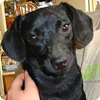 Adopt A Pet :: MONICA - Leesport, PA