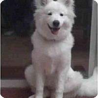 Adopt A Pet :: Lusi - Arvada, CO