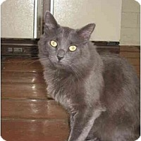 Adopt A Pet :: Spanky - Scottsdale, AZ