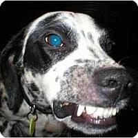 Adopt A Pet :: Tiny Tim - Milwaukee, WI