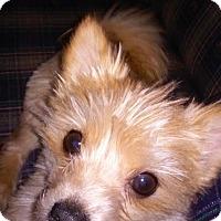 Adopt A Pet :: Louie - Chewelah, WA
