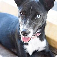 Adopt A Pet :: Luna - Marietta, GA