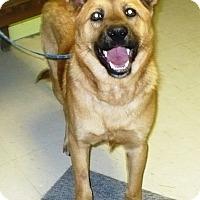 German Shepherd Dog/Black Mouth Cur Mix Dog for adoption in Eastpoint, Florida - Tank